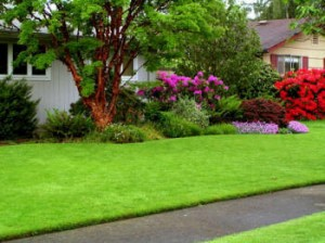 residential lawn care Fairhope
